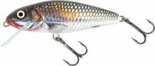 Holographic Grey Shiner